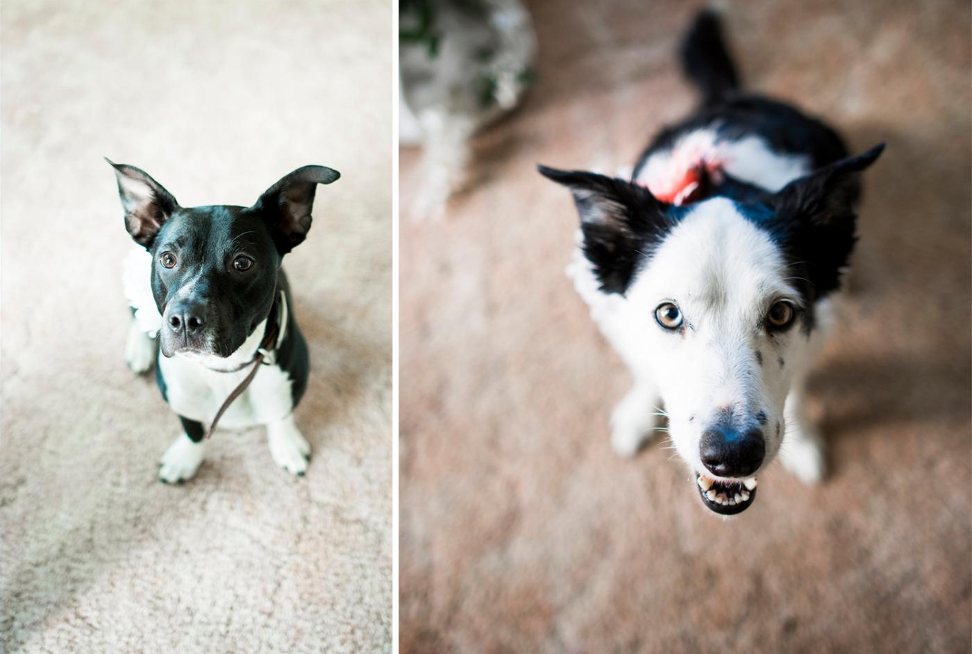 JaneS_photography_Seattle_2016_Kelsie_and_Kody_DSC_0780 copy dogs horizontal